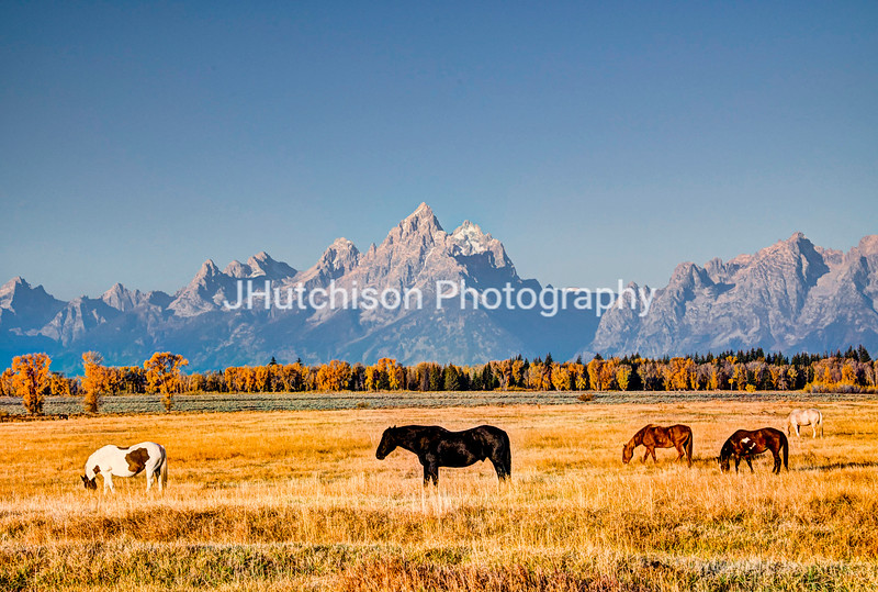 WY0037 - Grazing in God's Country