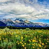 Summer Blooms in the Tetons