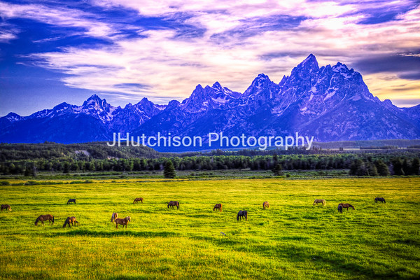 Horses Grazing at Dusk in the Tetons