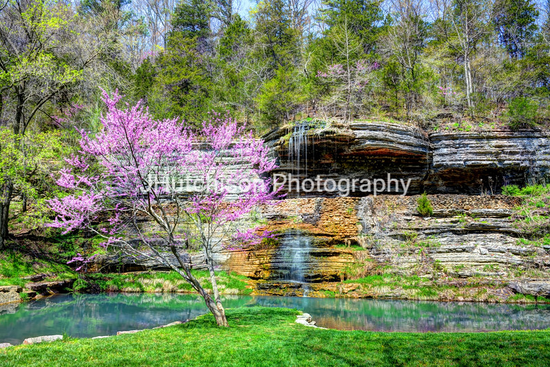 Redbud & Waterfall