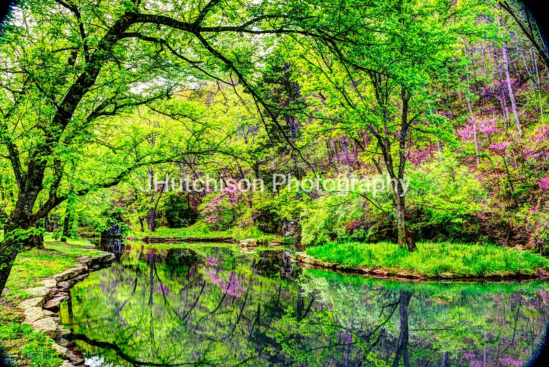 Spring Reflections in Dogwood Canyon