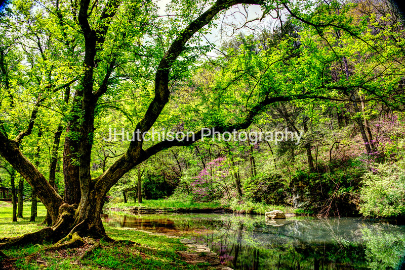Dogwood Canyon in Spring