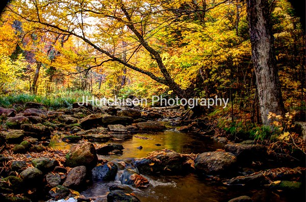 Golden Autumn Stream