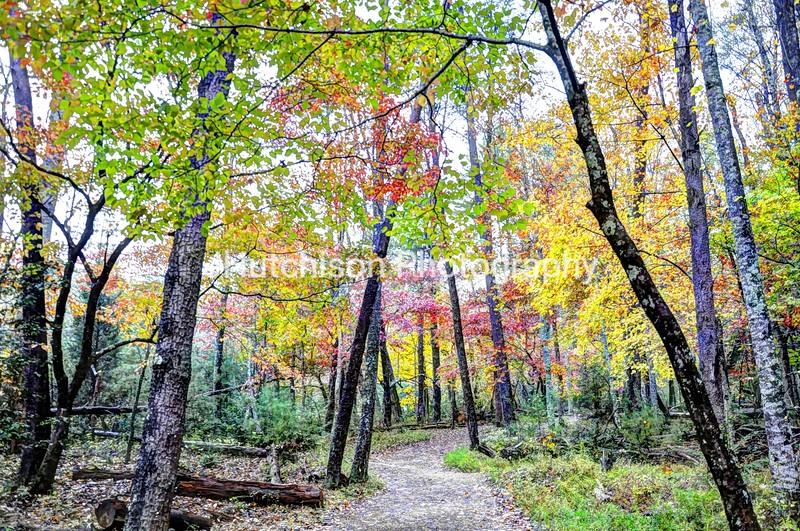 1093 - Smoky Mountain Colorful Trees & Path