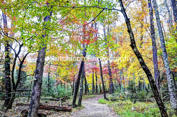 1093 - Smoky Mountain Colorful Trees & Path