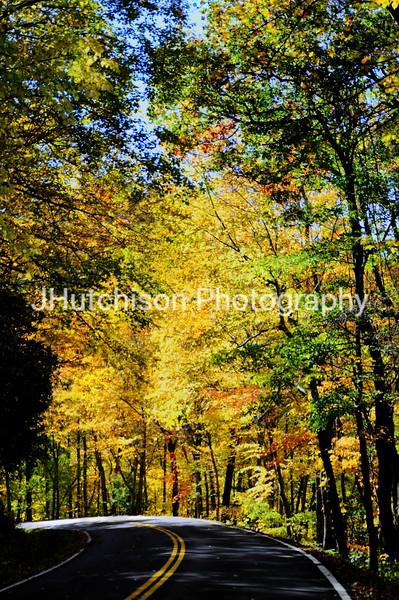 1094 - Smoky Mountain Trees Portrait