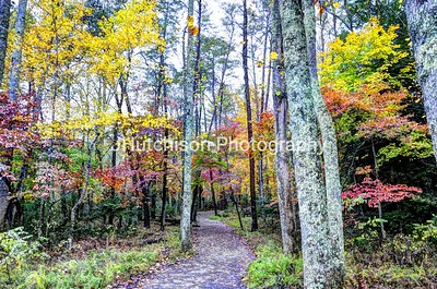 TN0003 - Colorful Path thru Smoky Mtns