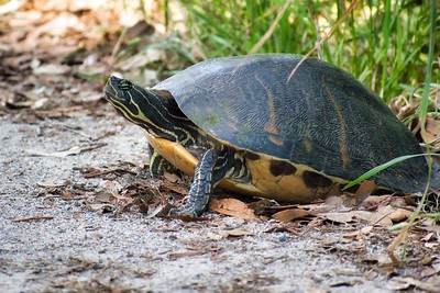I Love Turtles!