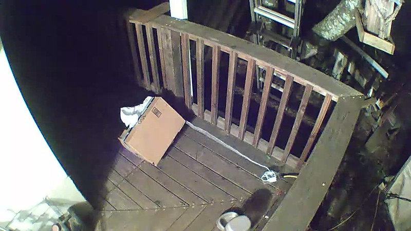 VIDEO of coon ravaging the feeder... 2:30 AM..this calls for a serious upgrade to the feeding plan