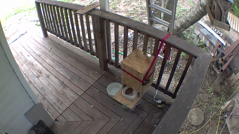 """The wifi feeder has an audio feature so when you initialize the feeder, you can add up to 10 repeating """"calls"""".. and he's learned to come if he's close and hears it calling him.."""