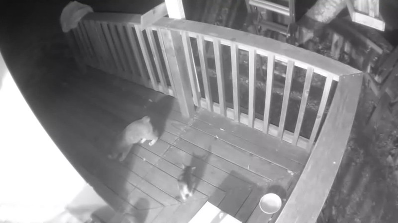 After that damned Possum knocked over the feeder, both of them are out there investigating what the heck was going on here....