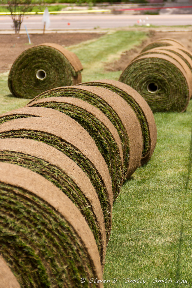 Day 169 - We have sod! Rolls and rolls of sod.