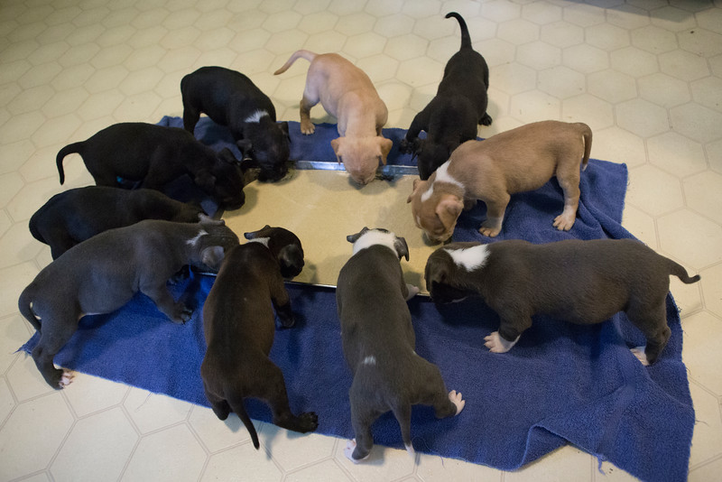 all-pups-eating