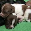 brownwh-sleep-feet2