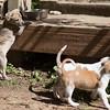 puppies1
