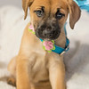puppy6r