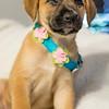 puppy6p