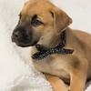 puppy2e