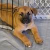 puppygate