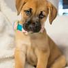 puppy6o