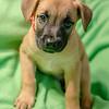 puppy1c
