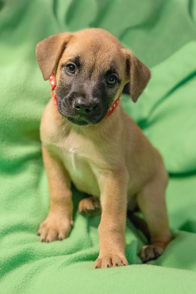 puppy1b