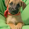 puppy1e