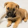 puppy2c