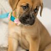 puppy6n