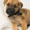 puppy2g