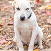 blonde-boy-hound6
