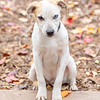 blonde-boy-hound4