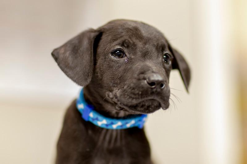 black-pupb1