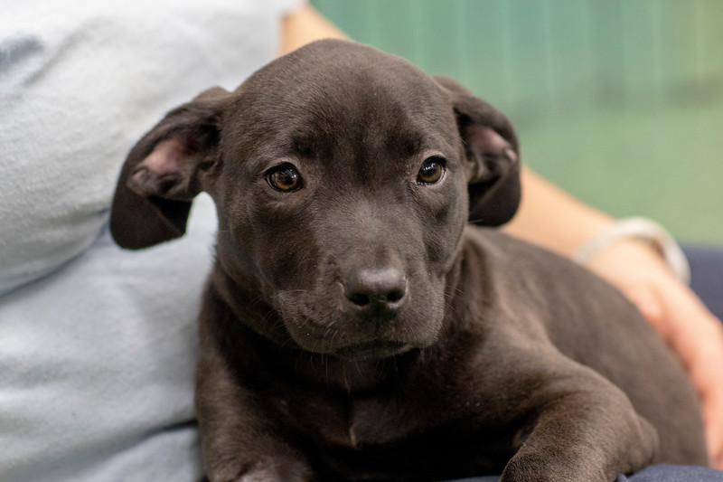 black-puppy1
