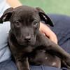 black-puppy7