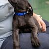 black-puppy4
