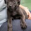black-puppy5