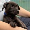 black-puppy2