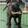 black-puppy8