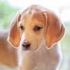 puppy17