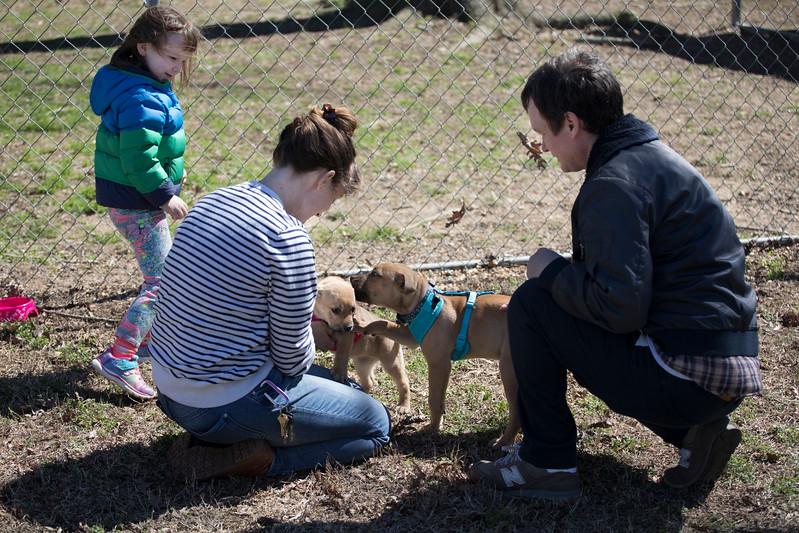 puppies-visitors