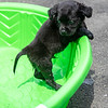 puppy-in-pool3