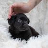 puppy-hand