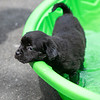 puppy-in-pool