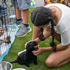 girl-pigtails-black-puppy
