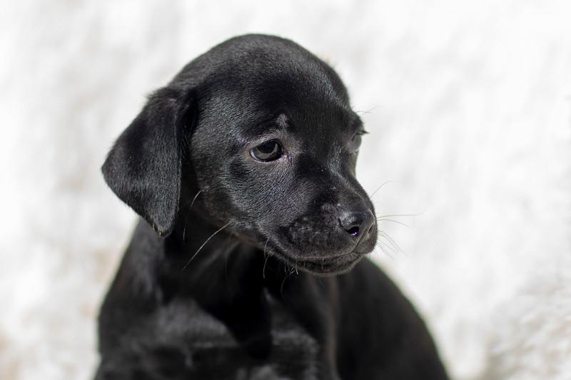 black-pup5