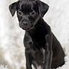 black-pup4