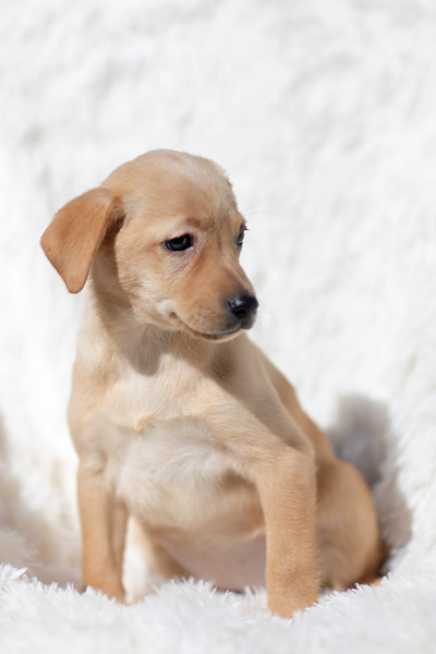 blonde-pup3