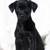 black-pup2