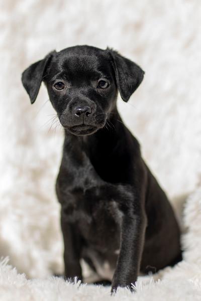 black-pup3